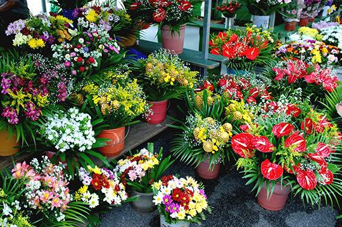 M.B. – Produção e Comercialização de Flores de Corte