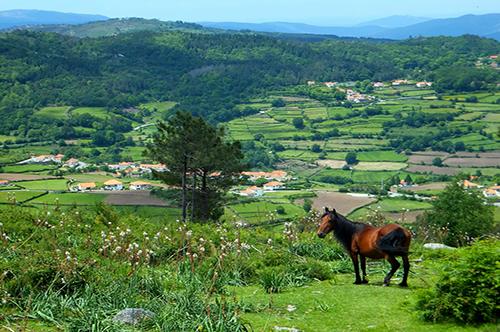 Promoção do Entre Douro e Minho Rural