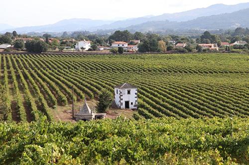 Promoção e Divulgação de Vinho Alvarinho – Quintas de Melgaço